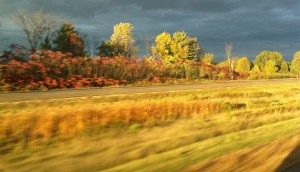 a fall day from a moving highway