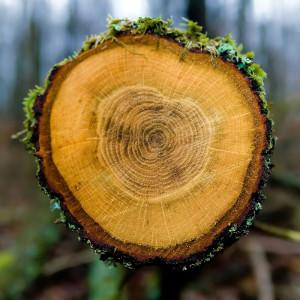 Tree rings photograph